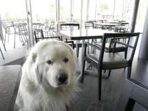 【レストラン】大型犬も同伴可。雪のシーズンや悪天候でも、愛犬と一緒にお食事が楽しめます。