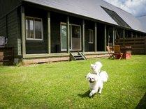 人気のプライベートドッグラン付、レイクサイドドッグヴィラで愛犬ものびのび。