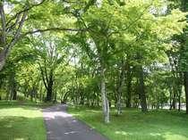 自然の廊下を通り、木々のアーチを抜けて森の中のお部屋にチェックイン!夏はカブトムシが獲れるかも!