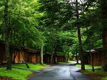 木々に囲まれた戸建てのログコテージ