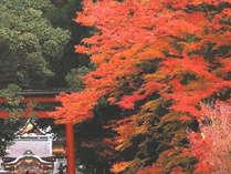 霧島神宮の紅葉2