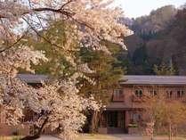 桜が咲き乱れる4月