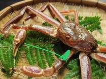 蟹の漁場に最も近い間人港だからこそ鮮度と肉質を落とさない 間人ガニ