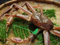 間人蟹は、間人港に水揚げされるブランド蟹です。数十種類ある基準をクリアした蟹のみ間人蟹となります