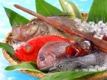 鴨川港から直送の地魚たち(一例)