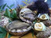 海の極上品アワビ;ウニ:さざえ:岩牡蠣!!!