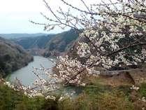 月ケ瀬梅林 古くからの梅の名所 見頃は、2月~3月