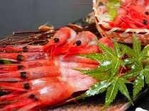 嬉しい食べ放題プラン♪ トロットロ&プリップリ♪ 日本海の女王様【甘エビ】を満喫下さい!