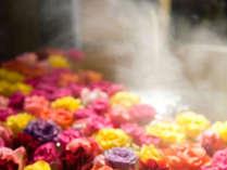 贅沢な薔薇一面の道後唯一天空露天風呂