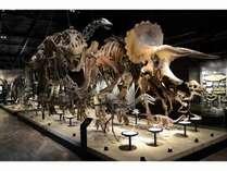 恐竜博物館入場券付ハーフオーダーバイキング♪ご宿泊プラン