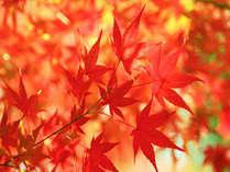 谷川岳や諏訪峡を散策!秋の紅葉を見に行こう!