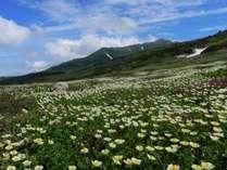 ■春・夏■高山植物の季節色彩豊かな風景が目を楽しませてくれます。