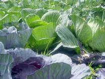 ホテルのお料理に使われている無農薬野菜。スタッフが毎日愛情をこめて育てています♪