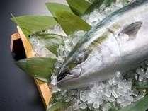 ☆[期間限定] 脂がのりきった天然ブリを個室食事会場でゆっくりご堪能あれ♪ 磯はなびの鰤会席