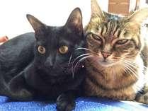 海風荘の猫のコウとトラです。他にも4匹の猫がお客様をお待ちしております