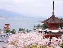 さくらが咲く季節に宮島へ