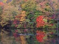 曲沢沼の紅葉