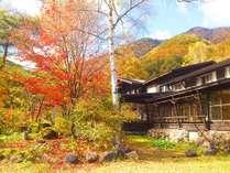 紅葉を眺めながらお部屋でおくつろぎください。もみじやナナカマドが見えるお食事処です♪