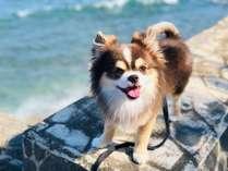 ◆平野屋はペット歓迎(小型犬・猫)!ペット同伴可能な宿泊プランをご用意しております。