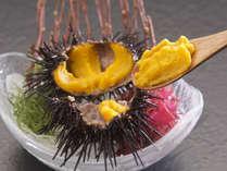北三陸のキタムラサキウニ 上品で優しい甘みが特徴