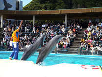 【一泊朝食~和食】 くじらの博物館入場券付き ☆イルカの餌あげ体験もついてお得な温泉スティ♪