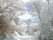【冬の雲仙】幻想的な光を放つ仁田峠の霧氷。自然の美しさに圧倒されます。(1,2月に数日雪が積ります。)