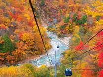 紅葉を空中散歩!苗場ゴンドラからの景色(一例です)