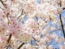 【桜を見に行こう♪】期間限定!「お部屋おまかせ」でお得に旅行♪★愛真館春旅プラン★