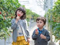 あま~い旬のいちごを食べ放題♪はままつフルーツパーク(イメージ)