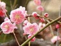 春はもうすぐ!!ホテル日航金沢でどうぞごゆっくりお過ごしくださいませ。