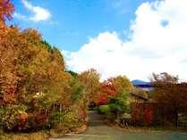 秋の紅葉の時期