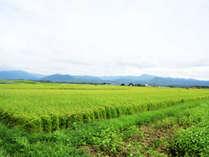 【7/13~16限定】青々と伸びる稲が広がる田園風景と日本料理の粋を味わうくつろぎの時間【贅-zei-】
