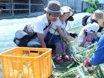 【体験プラン】淡路島で玉葱収穫体験&淡路島カレーを満喫◆旬会席●お食事処●
