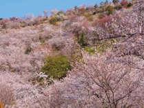 【花*花プラン】桜・ツツジ…満開に咲いた宮崎の春花♪お花見へGO!<3~5月限定>