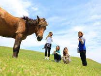 【串間観光×都井岬】野生馬に会える!みんなで山と海の大自然を体験♪(1泊2食付)