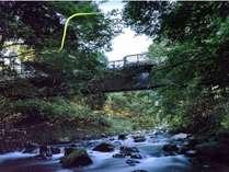【6-7月限定】天城湯ヶ島温泉のほたるの舞に出会う旅