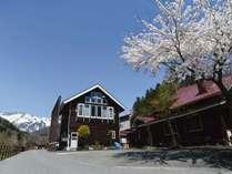 *外観/雪山と桜のコラボレーションが楽しめる春の景色。