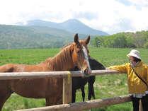 【蓼科第二牧場】6月になれば馬や牛が放牧されます。ほのぼのした風景が広がっています