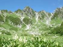 夏の中央アルプス千畳敷カールのお花畑