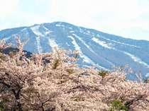 山桜と安比高原スキー場
