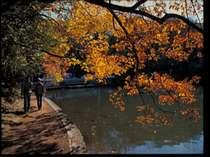 一碧湖の紅葉風景