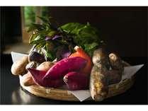 加賀野菜としてブランド認定された旬の野菜