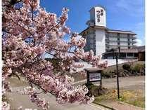 男鹿半島の桜開花は4月中旬頃から!