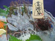 身の透き通るやりイカ。玄海活きイカは、お客様に出す前に捌くのでとっても新鮮!