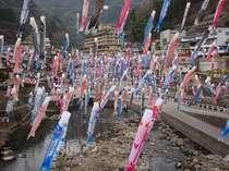 杖立川上空に3500匹の鯉のぼり~!^^4月1日~5月6日
