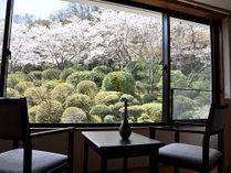 部屋より桜の咲く庭園を望む