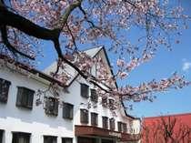 正面玄関の脇に咲く桜(春)