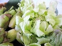 春の山菜(ふきのとう)