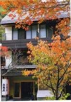 紅葉の頃は、当館も彩り豊かな木々に包まれます。写真の木は山桜です。