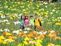 ◆早咲きから遅咲きまで100万輪のゆり園は7月下旬~8月中旬頃まで楽しめます。